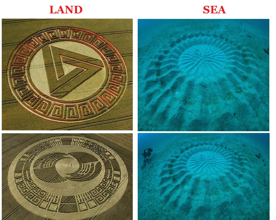 Underwater sand circles images for Puffer fish sand art